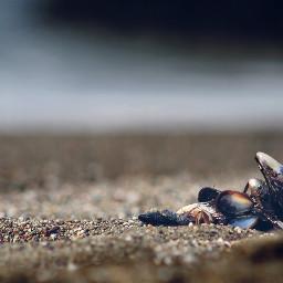 freetoedit beach shells ocean sand