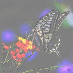 freetoedit butterfly zoom emboss polygon