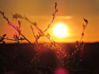 photography sunset plants emotions bokeh freetoedit
