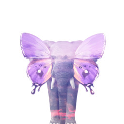 butterfly elephant wildanimal wildlife purple freetoedit