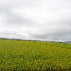 ricefield cloudysky fukui japan freetoedit