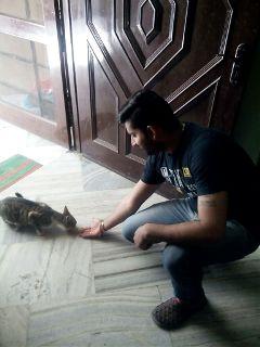 gugu love pets cat affection