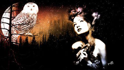 interesting art nature night owl