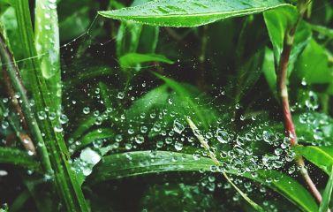 freetoedit mypic raindrops