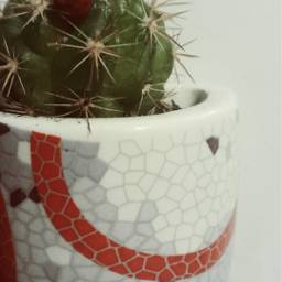 freetoedit cactus flower magnet lizard