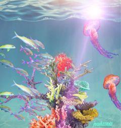freetoedit dailyremix sealife fish jellyfish