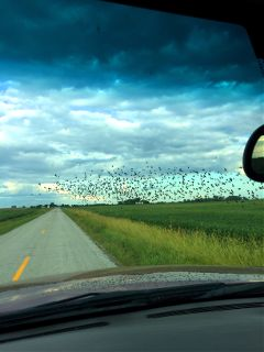 ontheroadagain birdsinflight road ontheway freetoedit