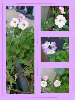 nature flower summer photography collage