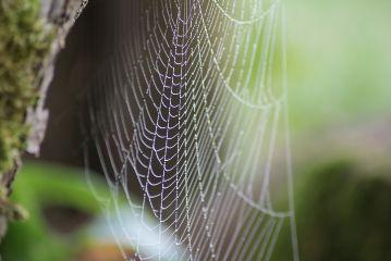 freetoedit cobweb autumn