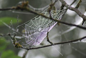 freetoedit spiderweb autumn