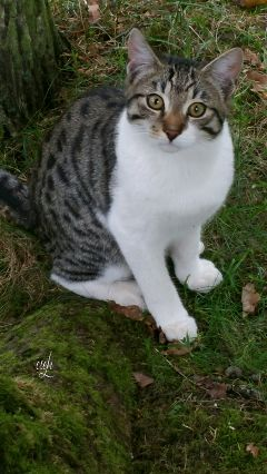 wood nature @csefi cat wildcat