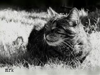 cats petsandanimals blackandwhite pets catselfie freetoedit