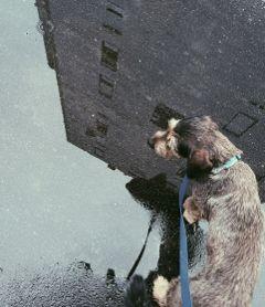 freetoedit dog petsandanimals rain fall