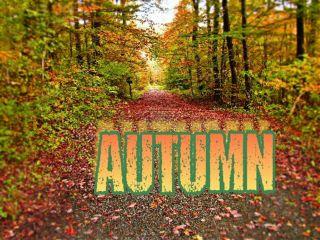 freetoedit nature trees seasons changeofseasons