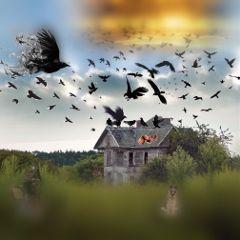 birds abandoned farm freetoedit