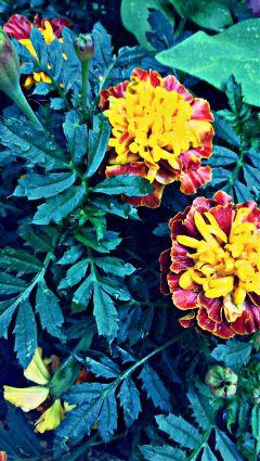 flowers beautiful photography quality edit