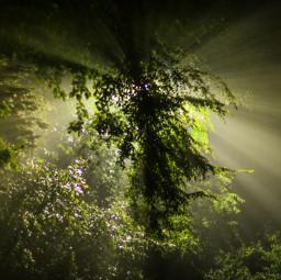 godrays night trees light green
