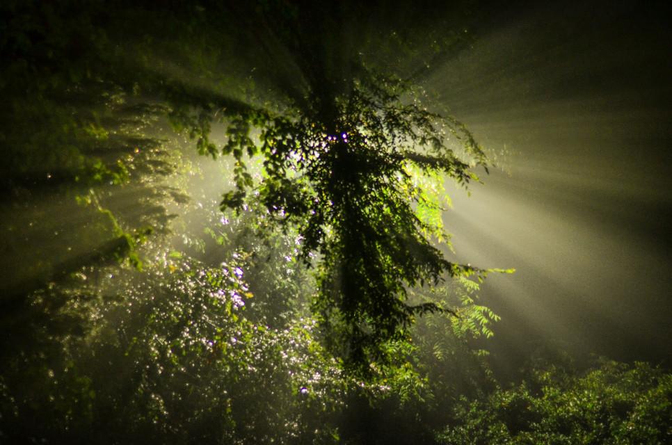 #godrays #night #trees #light #green