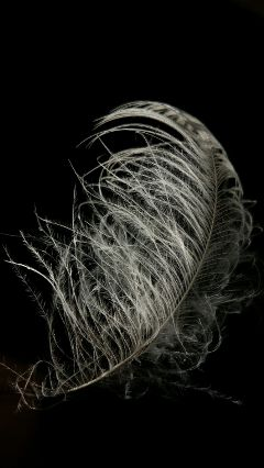 freetoedit contrast simple feather photography