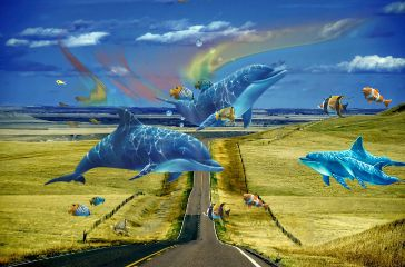 road dolphin fishes marinelife sea freetoedit