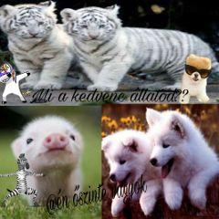 freetoedit animals i❤🐴 i