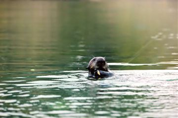 nature photography petsandanimals otter sealife