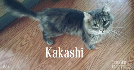 cat catphotography catlove caturday birthdaycat