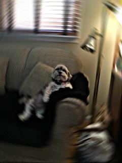radialblureffect freetoedit sophie puppy casual