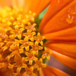flower orangeflower macro closeup rain dpcthecolororange pcthroughmylense pccolororange
