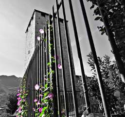 tower flower violet exploring aosta freetoedit