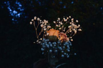 freetoedit driedflowers flowers nature photography