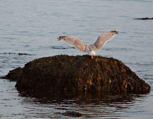freetoedit nature ocen bird