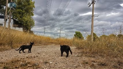 streetcats 💘 blackcatsrule