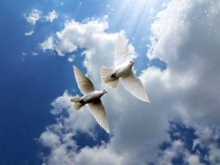 freetoedit clouds sky birds light