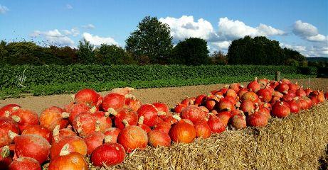 orange @csefi naturephotography inthefield pumpkin
