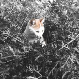 cat blackandwhite orangeandwhite orangecat mylovely