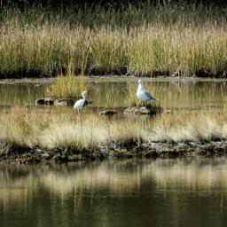 freetoedit nature birds reflection