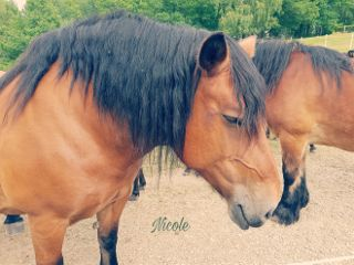 freetoedit horses beauty myphotography