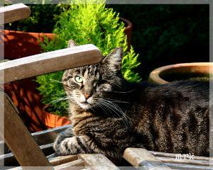freetoedit catsofpicsart cat petsandanimals photography