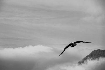 emotions seagull sky blackandwhite freetoedit