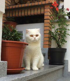 cat cats catlove catsphotography cateyes