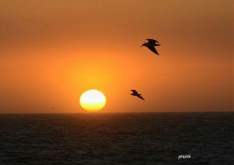 africa sunset freetoedit