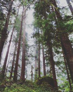freetoedit fog hikingadventures pnwonderland wanderlust
