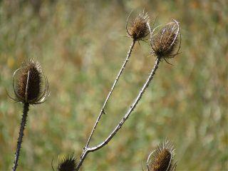 photography nature plants naturephotography emotions freetoedit