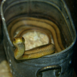 snake littlerockzoo
