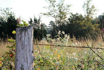 rural fence wildflowers freetoedit