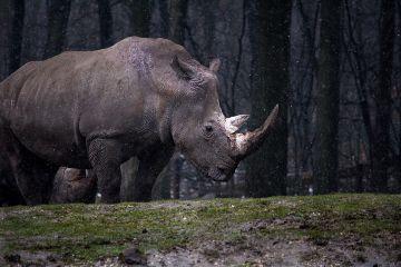 freetoedit rhino