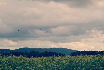 freetoedit flowers sky clouds birds