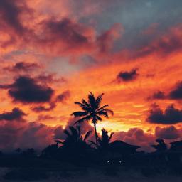 sunset hawaii palmtree beach freetoedit