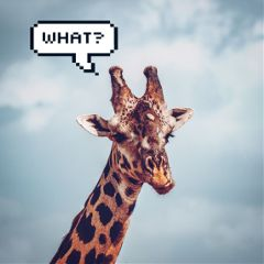 freetoedit giraffe what funny cute